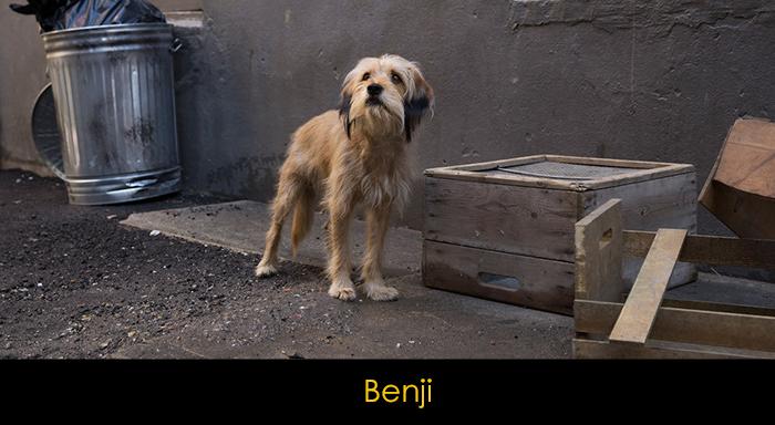 En İyi Köpek Filmleri - Benji