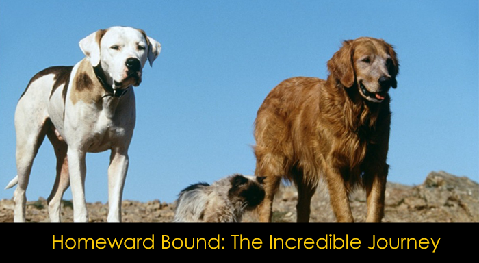 En İyi Köpek Filmleri - Homeword Bound: The Incredible Journey