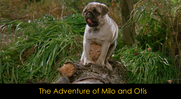 En İyi Köpek Filmleri - The Adventure of Milo and Otis